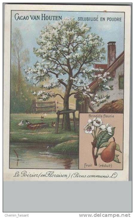 Chromo cacao van houten le poirier en floraison arbres pinterest le poirier et poirier - Calendrier taille arbres fruitiers ...