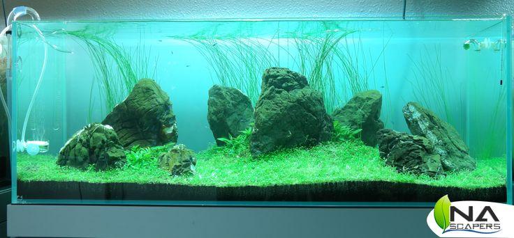 Paisaje en el que se ha utilizado glosostigma elatinoides, eleocharis vivipara en el fondo y staurogyne repens.