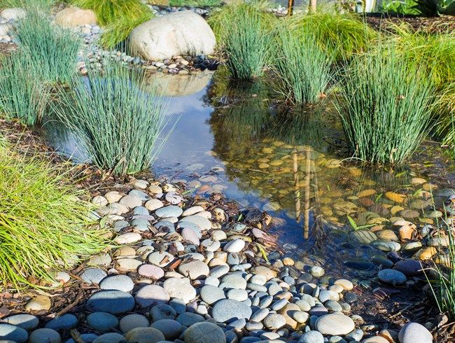 Rainwater Catchment, Rain Garden Theodore Payne Foundation Sun Valley, CA