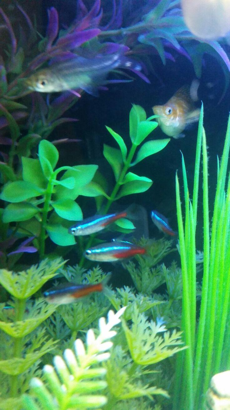 14 best Freshwater Fish You Need images on Pinterest | Freshwater ...