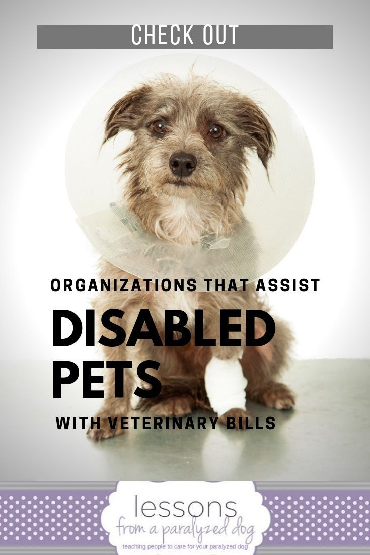 Life Is Expensive With A Paralyzed Or Disabled Pet Here S A Complete List Of Organizations In The Us Europe And Canada Tha Paralyzed Dog Dog Health Tips Dogs