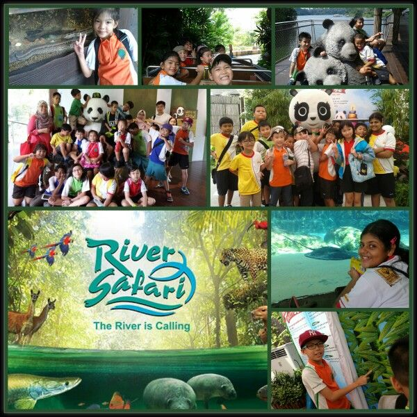 Sabana's third sponsored programme for Champs Network:  Last Friday, 12th September 2014, CHAMPS Network @ Blangah Rise spent their time at River Safari!  A whole noon of exploring interesting and unique animal species that can be found in well-known rivers and forests around the world. The kids were even more excited when taking a boat ride at Amazon River Quest, where they had a close up view of ground animals! Also, they caught sight of favourite giant pandas, Jia Jia and Kai Kai over at…