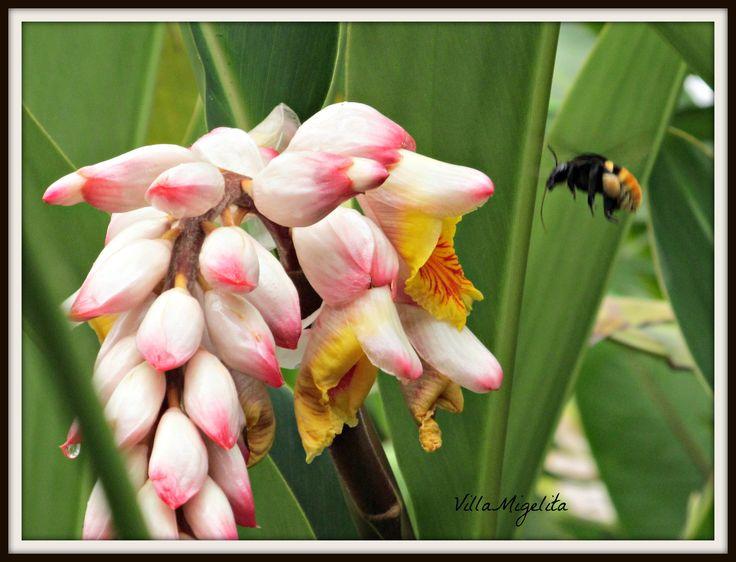 Bee going for flower