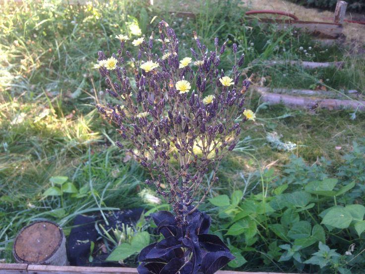 Purple Lettuce Looks So Cool When It Flowers #gardening #garden #gardens  #DIY · Hinterhof IdeenKleine HinterhöfeGartenbauBlume ...