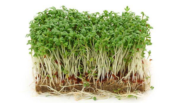 Comment faire ses germinations et ses pousses - Santé Nutrition