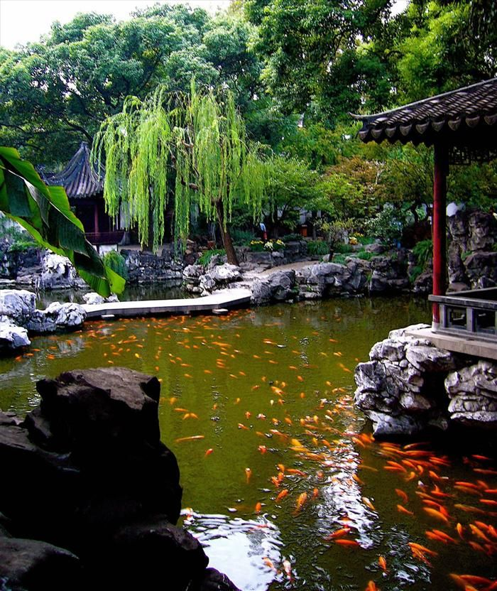 Yuyuan Garden, a koi pond. Most Chinese gardens incorporate water, either moving or still. Usually they would have a pond, and perhaps a few off-shooting streams, home to a variety of fish, such as carp or goldfish. Sometimes they will have mandarin ducks. The water has a calming effect that boosts that feeling of serenity the gardens are made for.