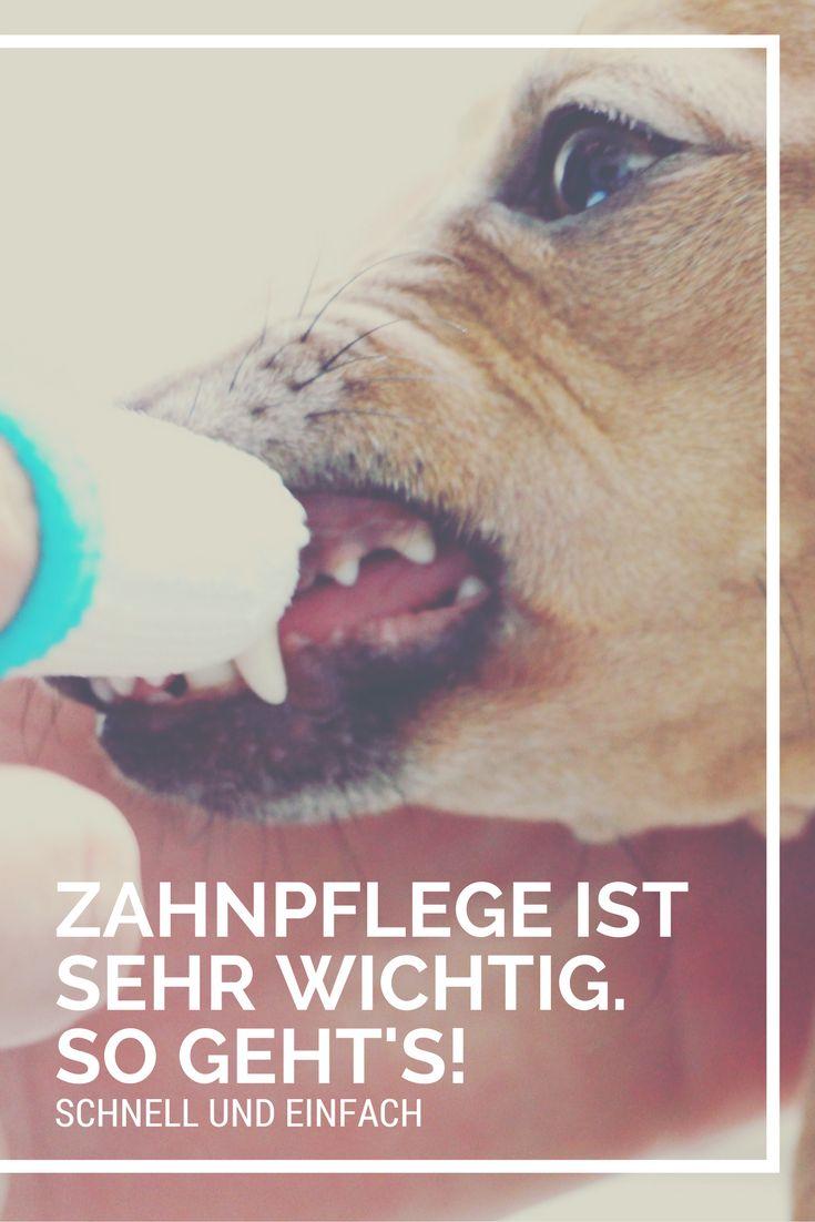Unser Tipp für einfache und schnelle Pflege für gesunde Zähne Deines Hundes.