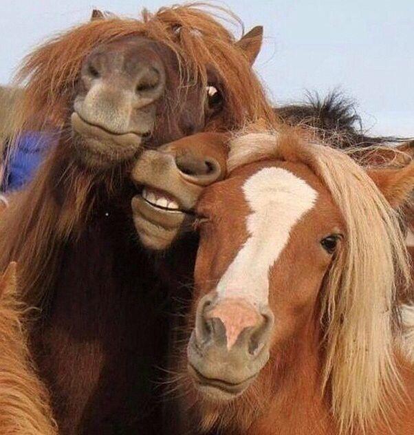 Hest er best! Som pålegg❤️