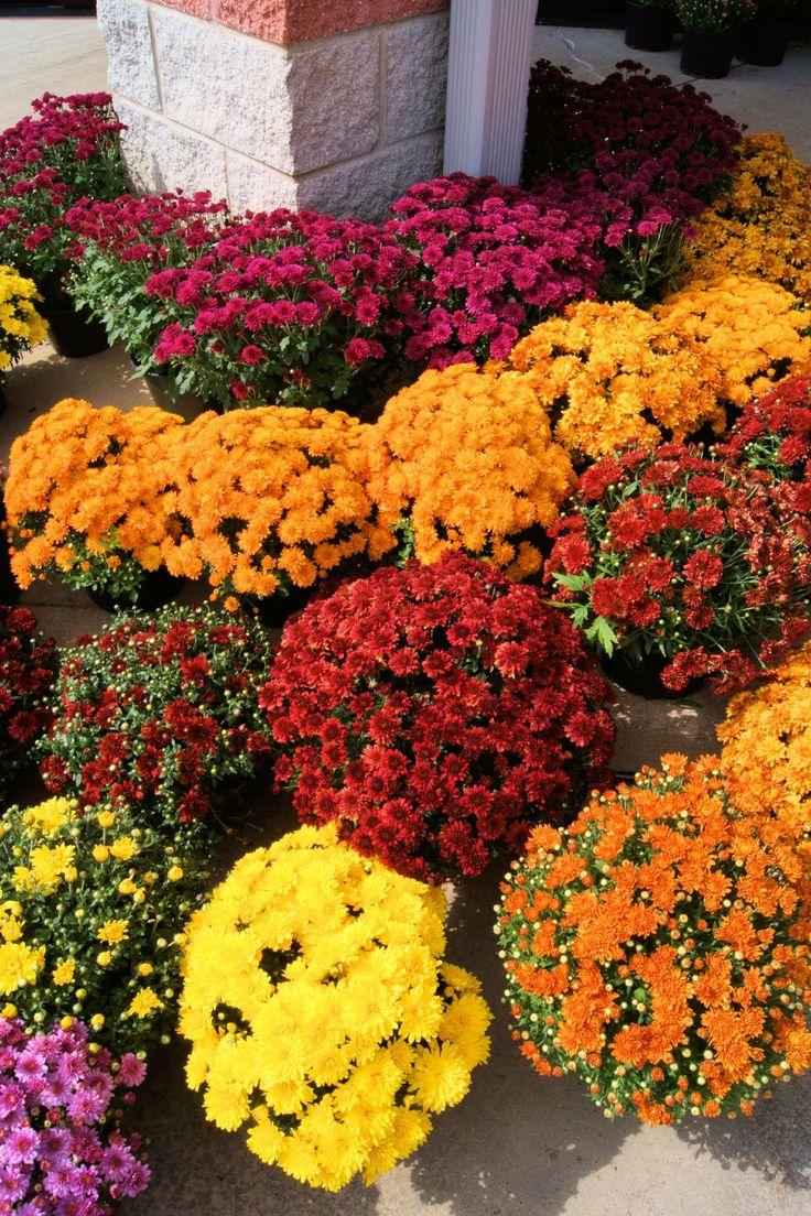 Best 25 low maintenance plants ideas on pinterest low for Best low maintenance garden plants