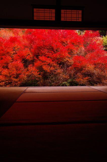 Azalea garden in autumn colors at Ankoku-ji temple, Hyogo, Japan: Photo by hirotie on PHOTOHITO