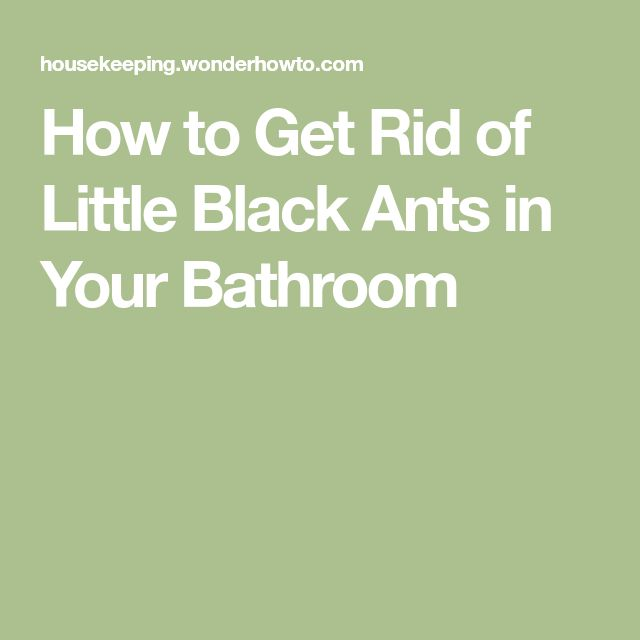 How to Get Rid of Little Black Ants in Your Bathroom