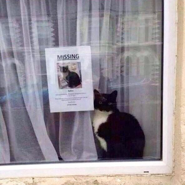 What are the odds?http://laughingsquid.com/missing-cat-found-sitting-next-to-its-own-missing-cat-poster/?utm_content=buffer65bfe&utm_medium=social&utm_source=facebook.com&utm_campaign=buffer