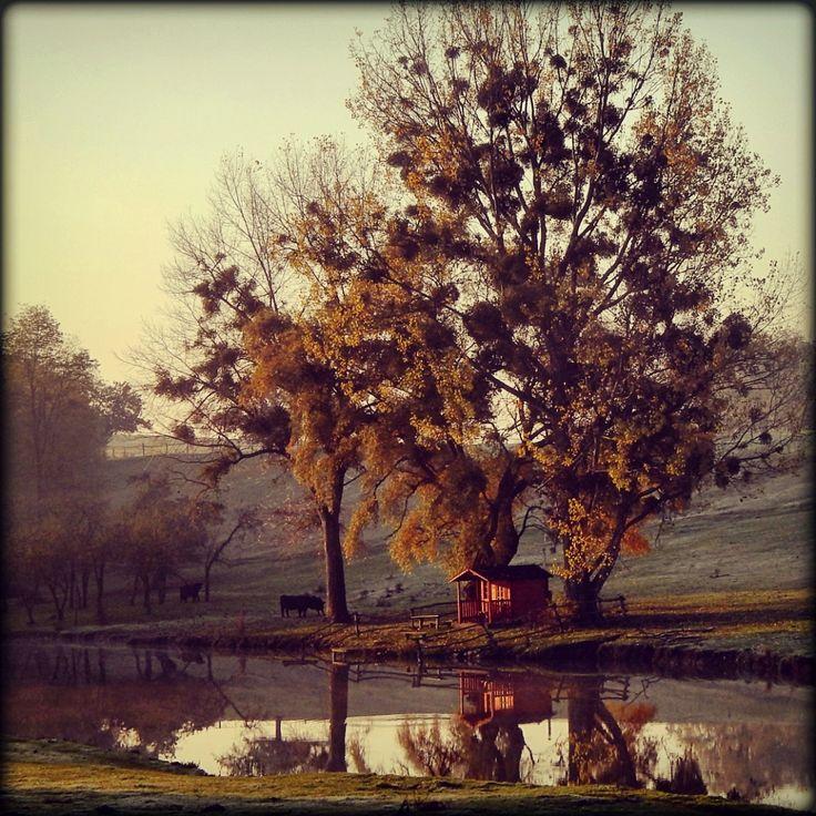 Almádi Ildikó Az ősz színei... Egy hűvös novemberi reggelen készült ez a kép.  Több kép Ildikótól: www.facebook.com/ildiko.almadi