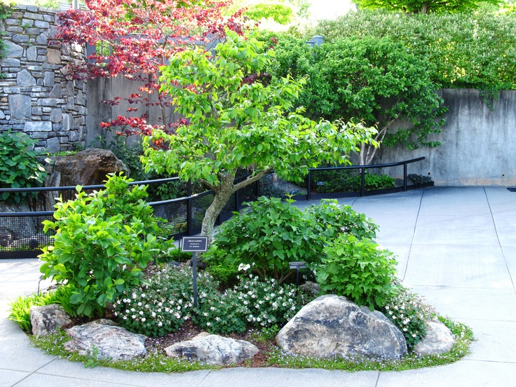 Bonsai garden at the north carolina arboretum bonsai for Landscaping plants south carolina