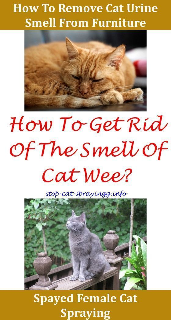How To Get Rid Of Cat Spray Smell In Carpet