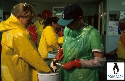 Washing oiled African Penguins @ SANCCOB