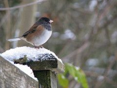 WA-List » Birds of Winter