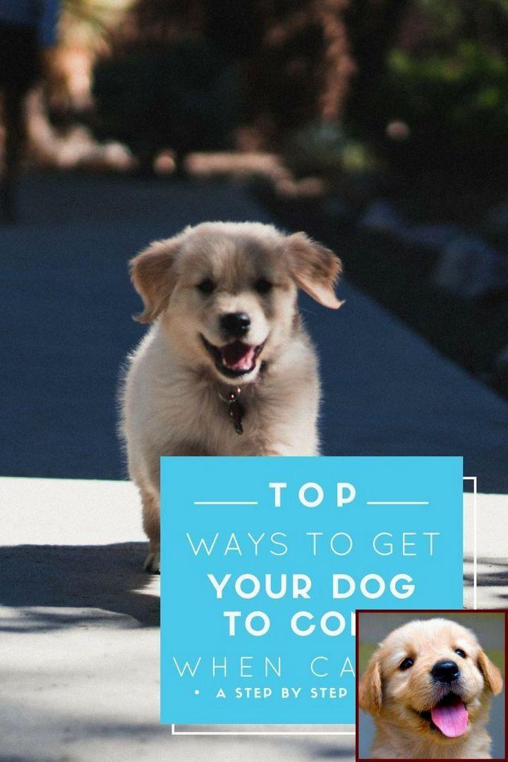 1 Have Dog Behavior Problems Learn About Dog Behavior Upset