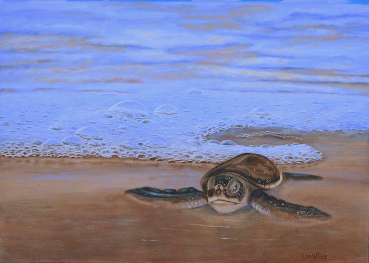 """C'mon guys ... the water's fine!"" Carole Elliott's latest turtle painting to support turtle rescue and rehabilitation.  How cute is he! #art #originalart #greatbarrierreef #gbr #turtle #turtlehatchling #cute #australianart #carolelliott7 #beach #turtles"