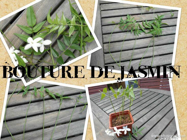 http://lepotagerdepascaline.blogspot.fr/2014/05/bouture-de-jasmin-officinal.html