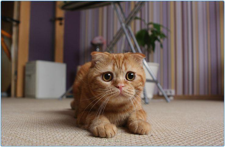 #россия #лиса #животные #колли #щенки #кошки #кошка #собака #animals #cats #dogs #animal #dog #cat #lovedog #lovecat #russia #kolli
