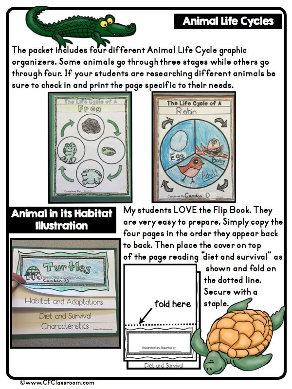 Classroom Research Ideas : Best bird classroom theme ideas and decor images on
