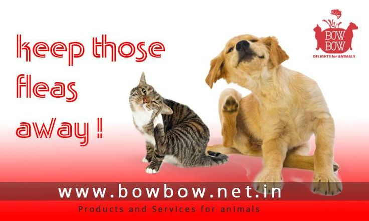 Groom your pets this monsoon. Choose pet grooming products from www.bowbow.net.in  #bowbow #makeinindia #petstore #petsupplies #petservices  #petportal #petlove #doglove #cutedogs #cutecats #petproducts #petservices #petsnack #happypets #loveanimals #petowners