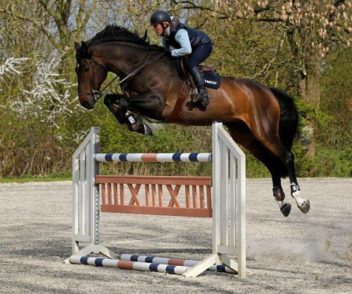 holy moly! look at this horse