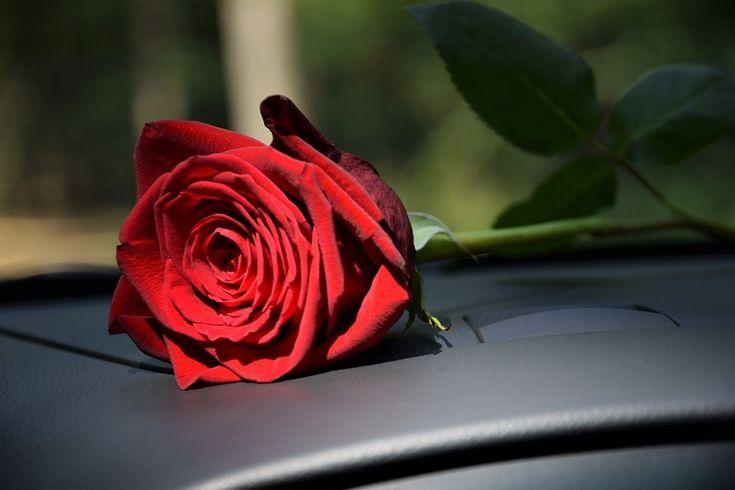 Розы картинки с машинами