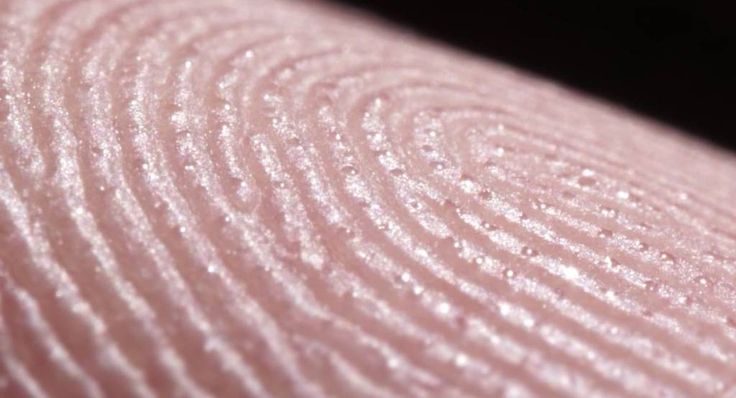 An up close look at fingerprints and sweat glands | The Kid Should See This