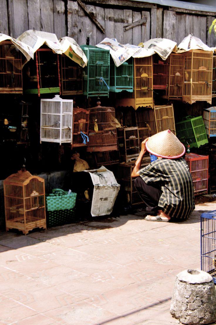 pasar burung di Yogyakarta