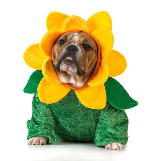 Top 10 Best Dog Costumes in 2015   Top Dog Tips
