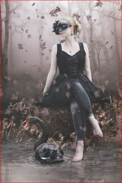 Black Swan  http://www.babsartcreations.com/pages/190191/Bab_sArtCreations.html