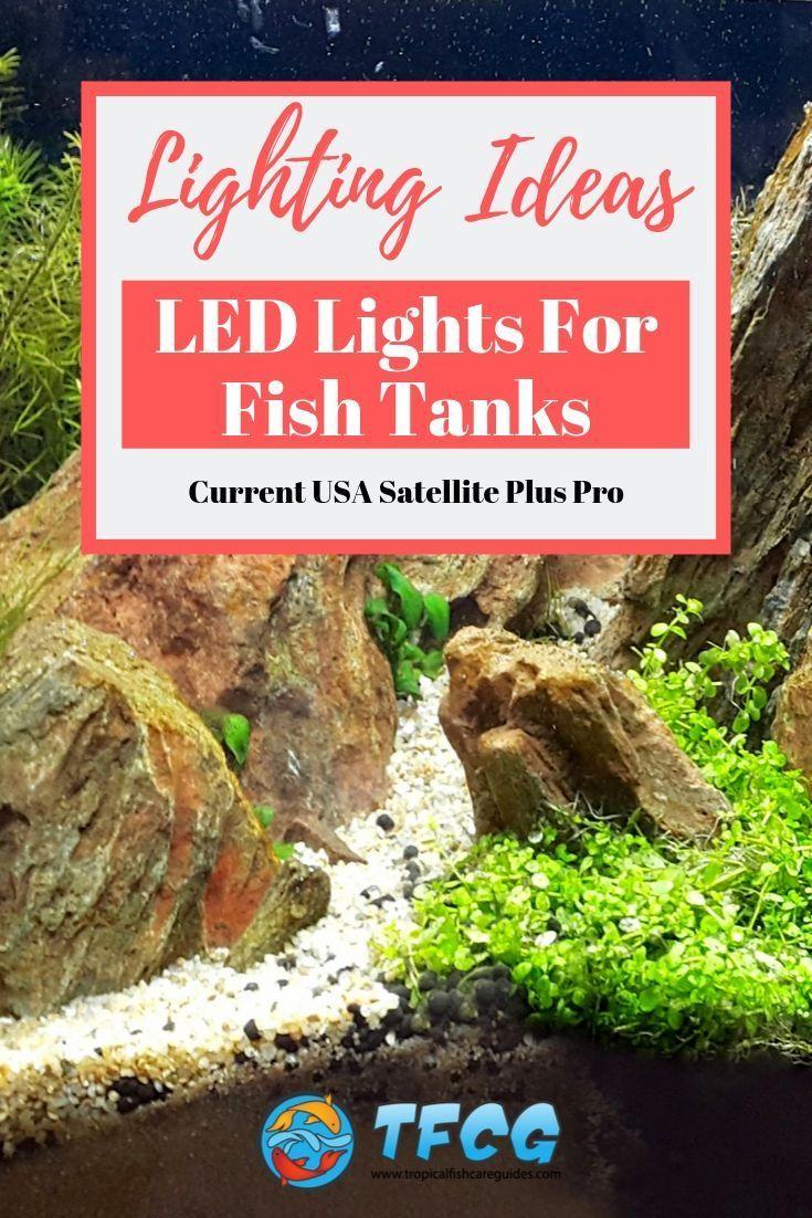 Current Usa Satellite Plus Pro Review 2020 Big On Control Fish Tank Fish Tank Lights Fish Tank Plants