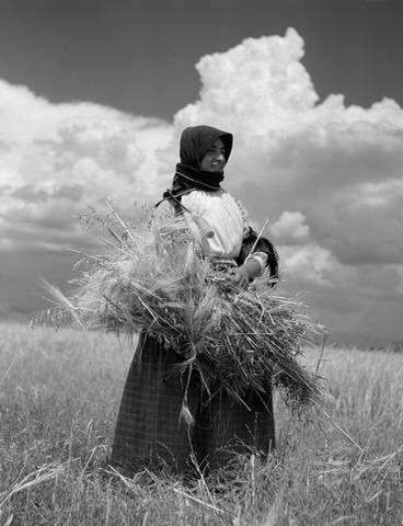 Takis Tloupas.Karditsa.Thessaly. Greece.Καραγκούνα θερίζει στην Καρδίτσα το 1954.φωτ.Τάκης Τλούπας