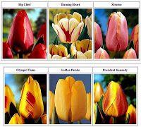 Toko Bunga Tulip di Jakarta Barat | Toko Bunga by Florist Jakarta
