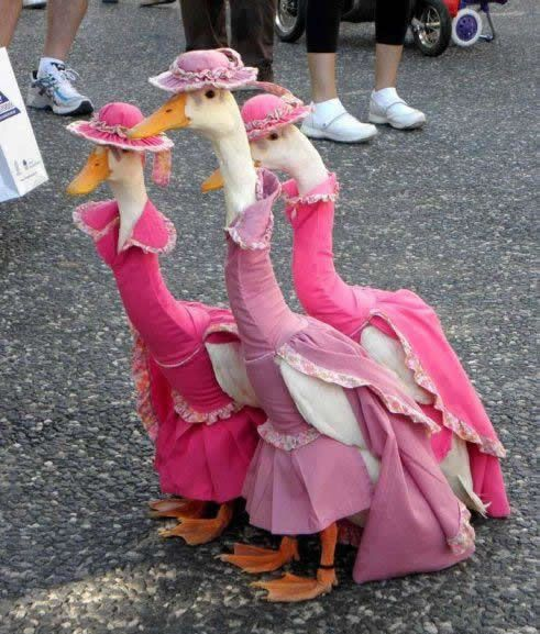 Geese in gowns!  So cute!