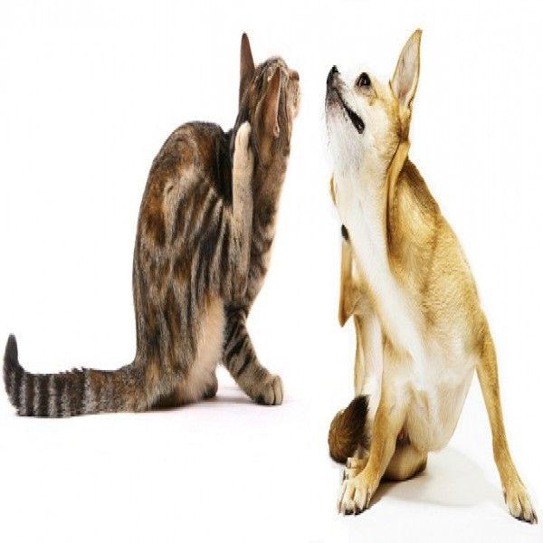 9 besten Gatos Bilder auf Pinterest | Kätzchen, Flauschige kätzchen ...