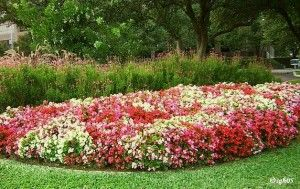 Best south Texas plants!