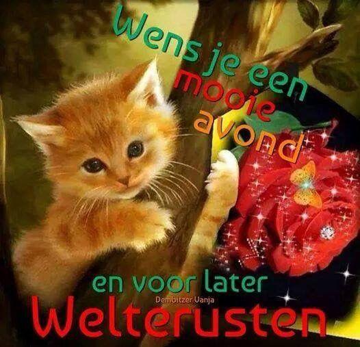 Good Morning Everyone In Dutch : Goede avond fijne pinterest