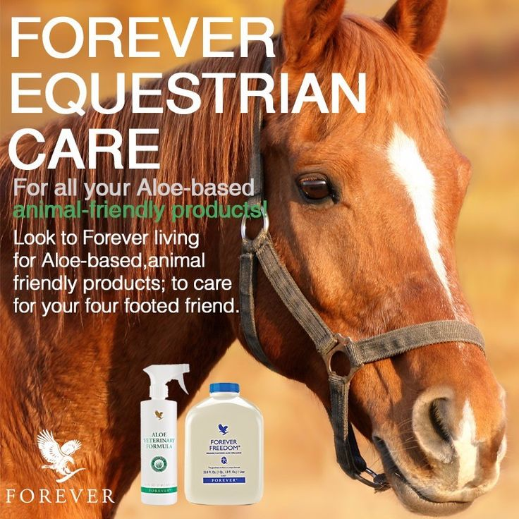 Aloe Veterinary Formula for horses. Why Forever? Because Forever has always been strongly against animal testing http://wu.to/Pmziuy
