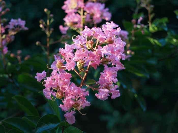 Самые редкие цветы в мире