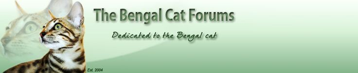 Bengal Cat Forums • View topic - Choosing a cat climber/ cat activity centre for two bengals