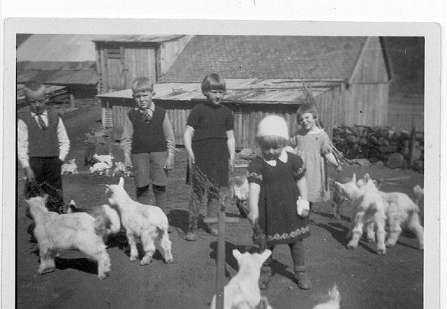 N: Barn og killingar på Brekke i Flåm kring 1955.  E: Children and kids at Brekke in Flåm around 1955.  D: Kinder und Zicklein auf Brekke in Flåm, etwa 1955. Foto: ukjend Eigar: Guttorm T. Brekke