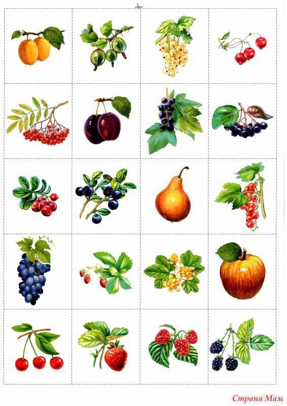 опоздание ягоды и фрукты в картинках для малышей трех лет