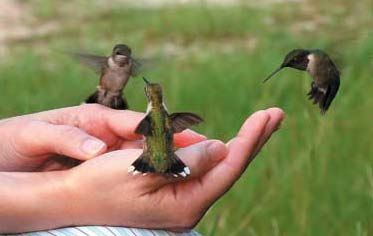 How to Attract Hummingbirds to Your Garden .read everything i could about