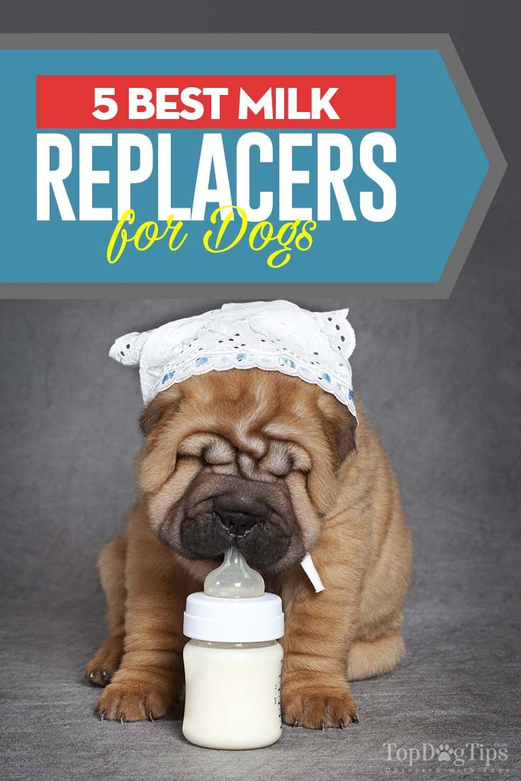 5 Healthy And Enriched Milk Replacers For Puppies Top Dog Tips