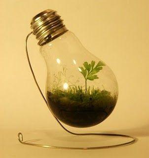 Reciclar lâmpadas queimadas: Gardens Ideas, Crafts Ideas, Trav'Lin Lights, Indoor Gardens, Minis Gardens, Greenhouses, Lights Bulbs, Lightbulbs, Diy Projects