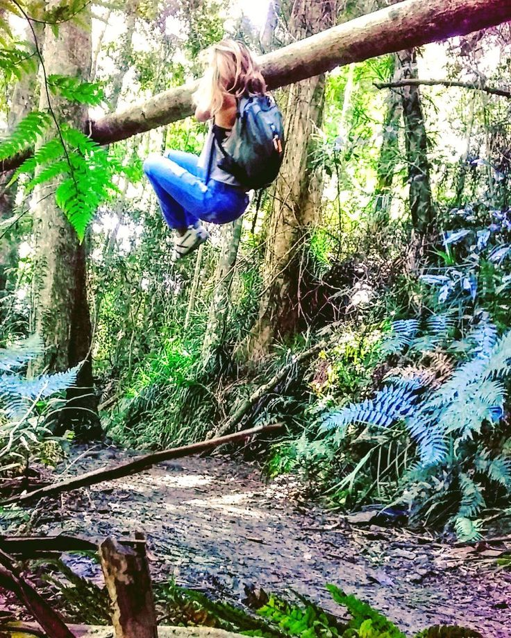 Horizontal Tree Climbing. #sydneystrengthconditioning #treeclimber #naturalobstacles
