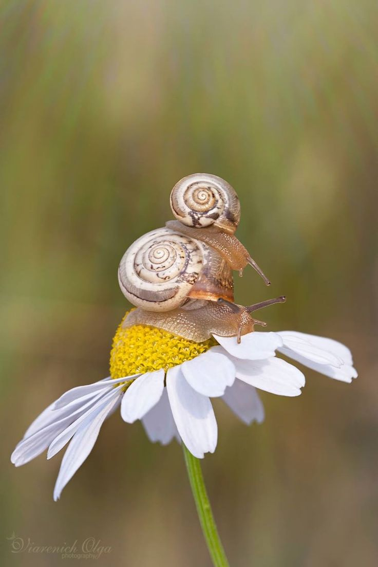 .Ideas, Nature and Art More Pins Like This At FOSTERGINGER @ Pinterest